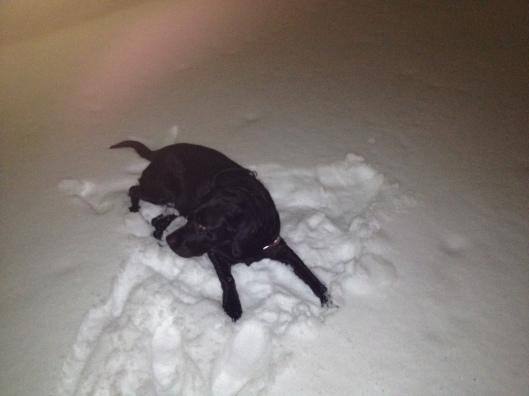 svart Labrador snö rulla runt snöängel.jpg